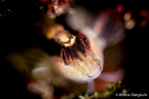 Look me in the eyes!